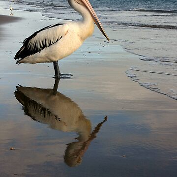 Pelican by JulieJustPhotography