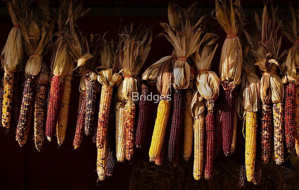 Colors of Corn by Bridges