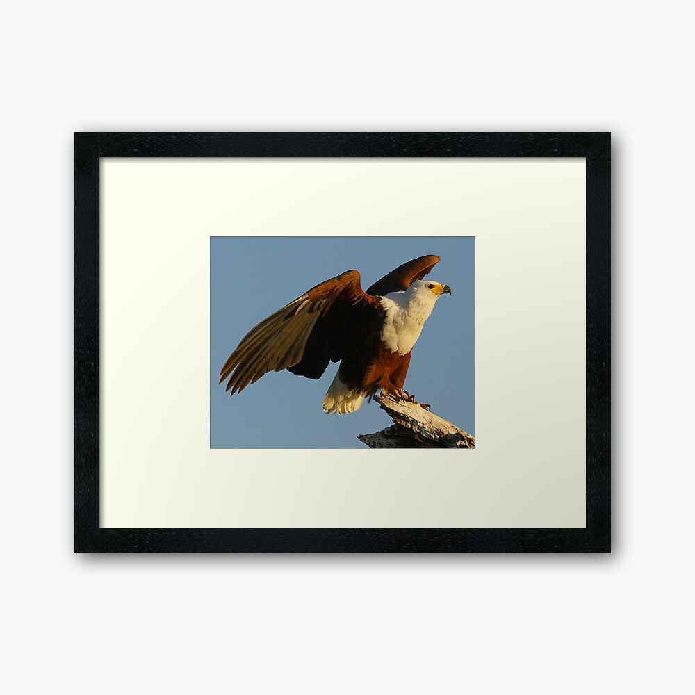 The Launch Framed Art Print