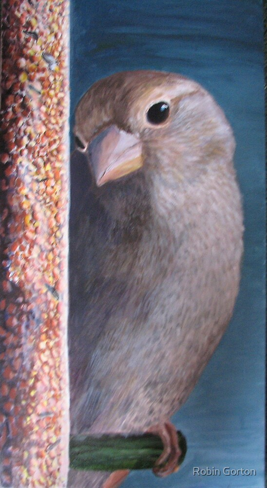 Sparrow by Robin Gorton