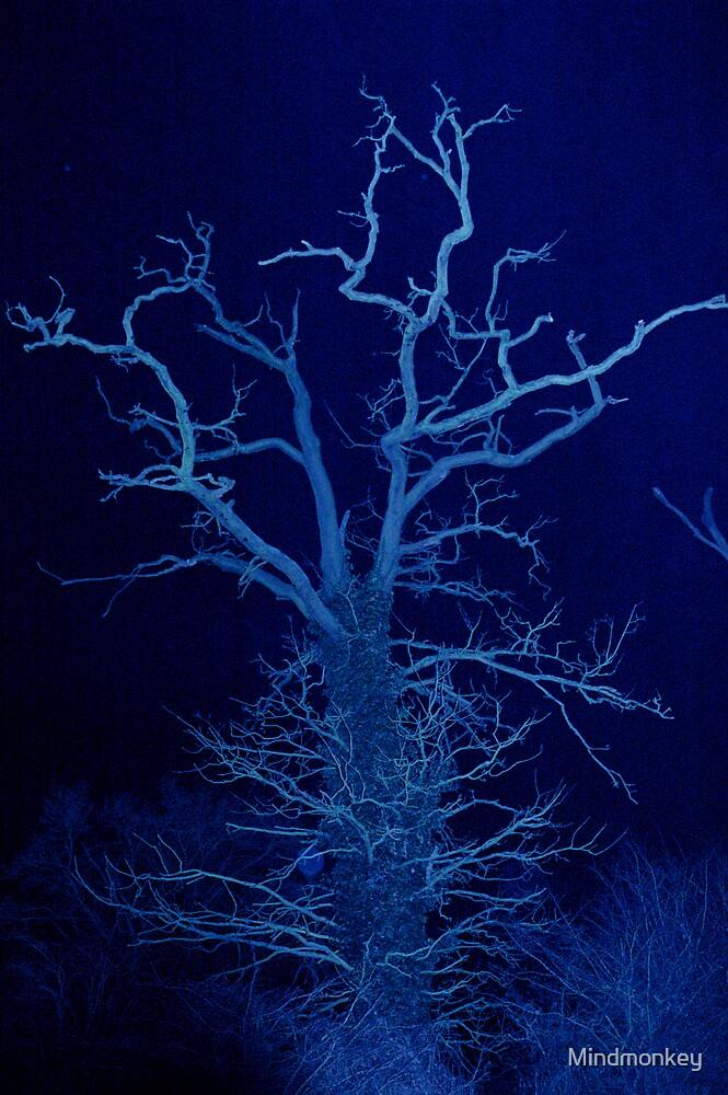 Dark wood by Mindmonkey