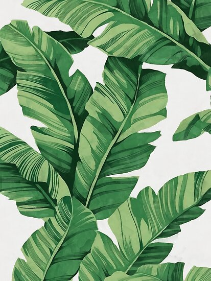 Tropical banana leaves von CatyArte
