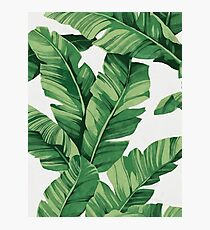 Tropical banana leaves Fotodruck
