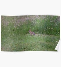 Rabbit in Grass  Poster