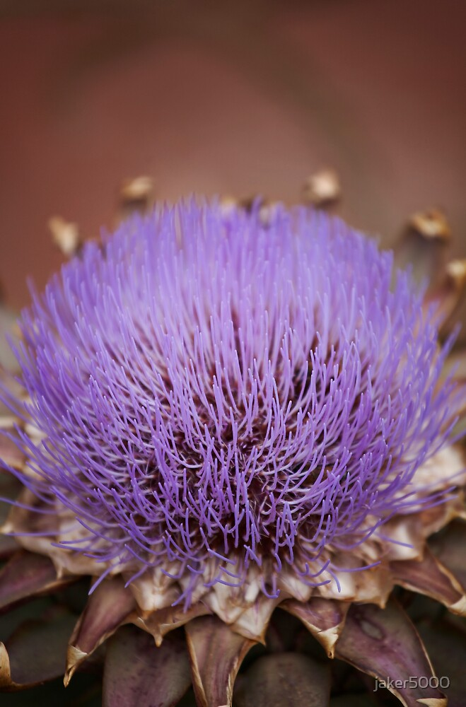 Artichoke flower by jaker5000