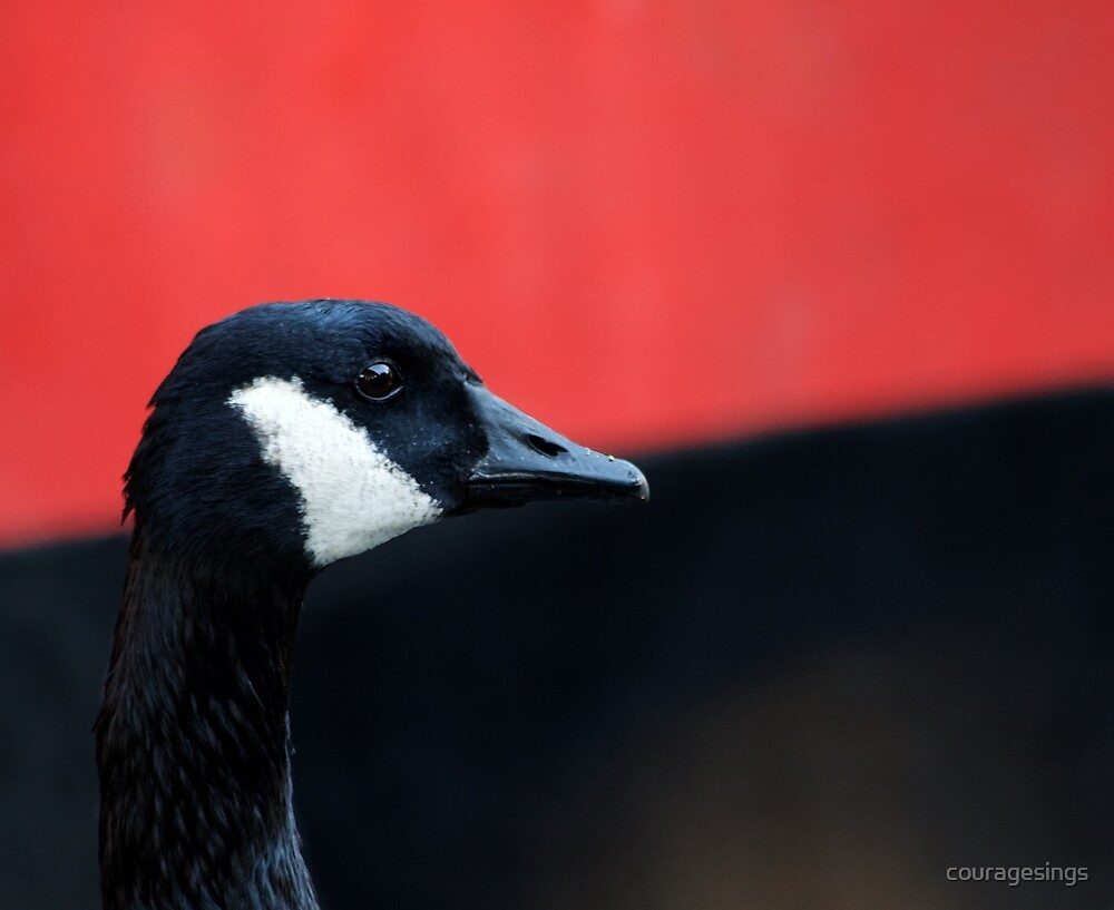 Canada Goose by couragesings