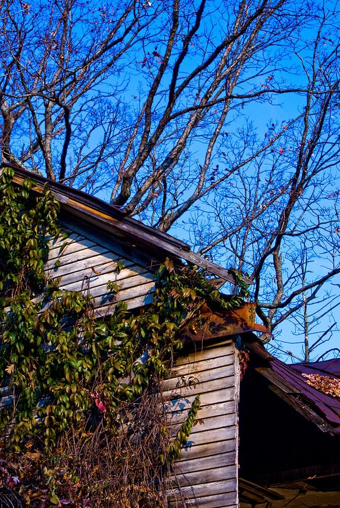 Vibrant Overgrowth #1 by Rod  Adams