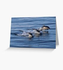 Dolphins Leaping off the Isle of Harris, Scotland Greeting Card