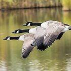 Formation Flying by MikeSquires