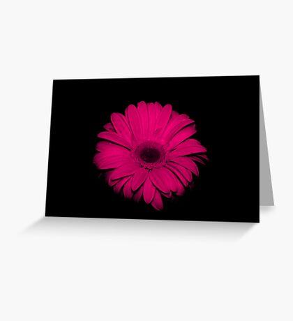 Pink  Gerbera.... on black... Greeting Card