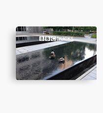 BBC Ducks Canvas Print