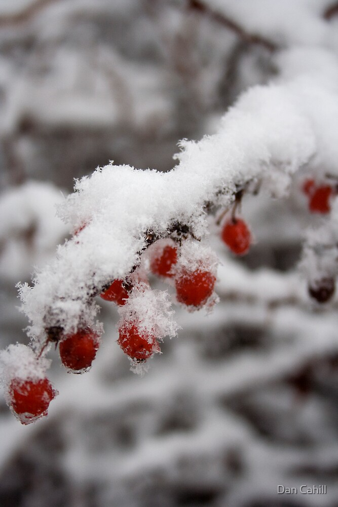 Hot Red Berry Cold by Dan Cahill