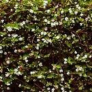 Flowers in the hedge by Danielle Espin