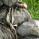 Roots by Nasif Hussain