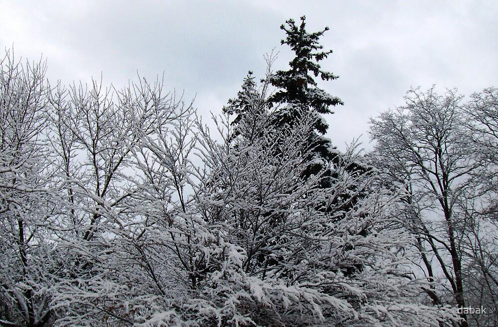 Snow-clad by dabak