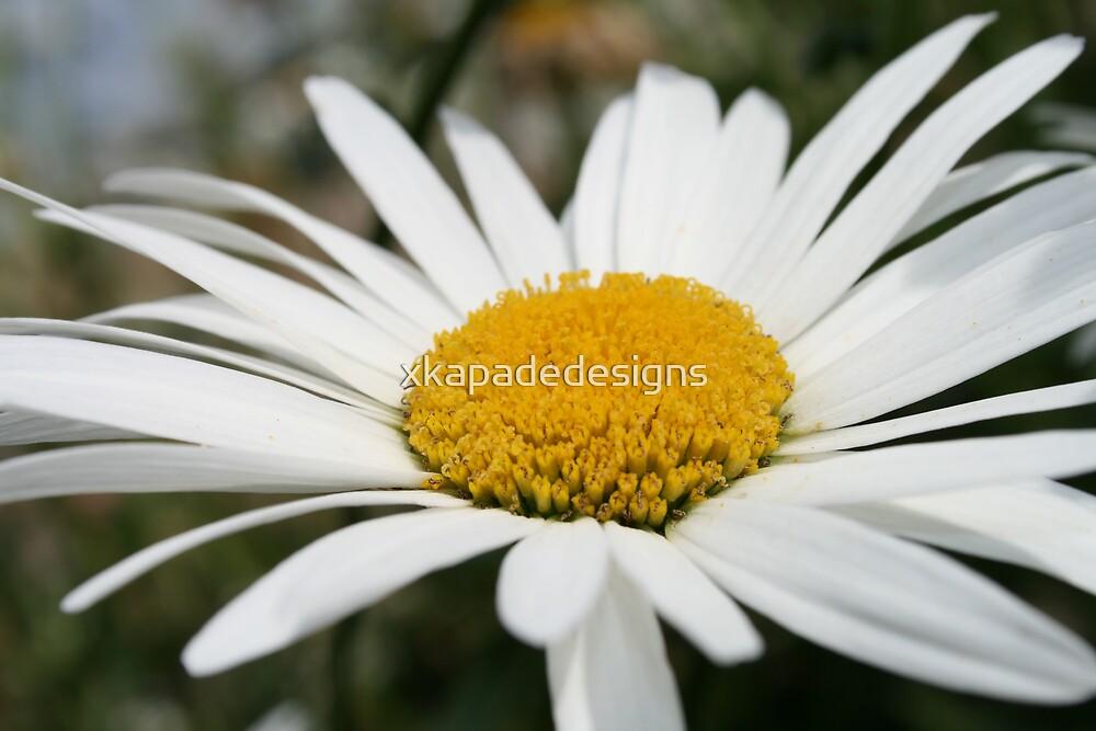 Flower by xkapadedesigns