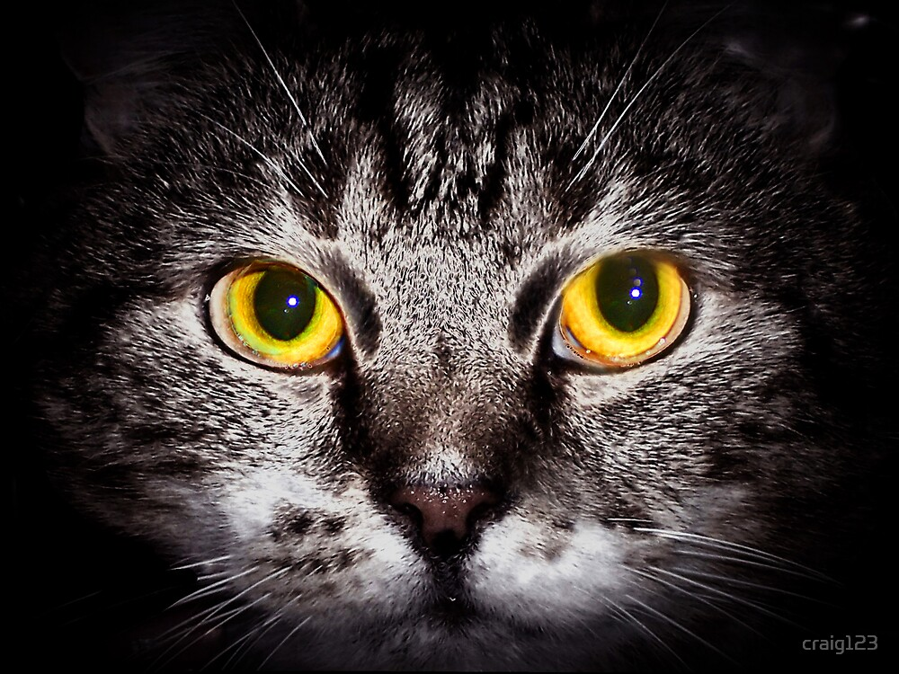cats eyes by craig123