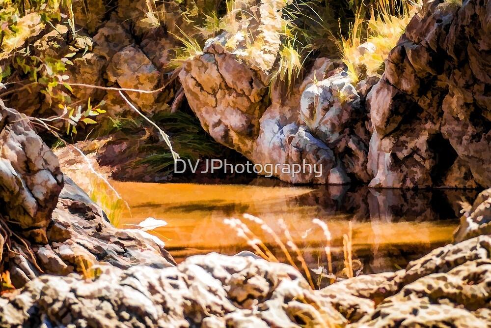 Pond by DVJPhotography