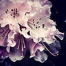 Georgia Flowers by VioletBiggs