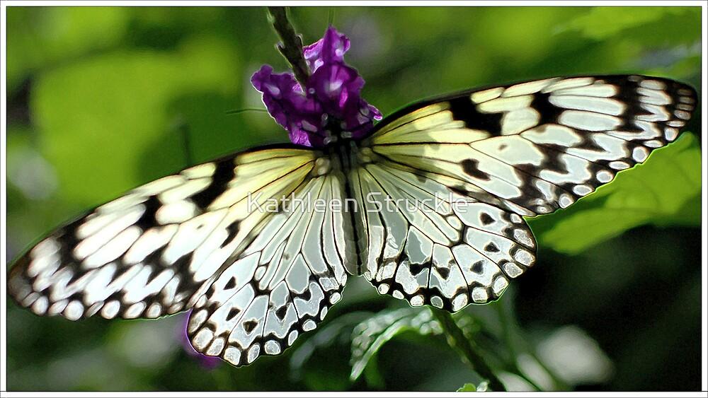 Flutterfly by Kathleen Struckle