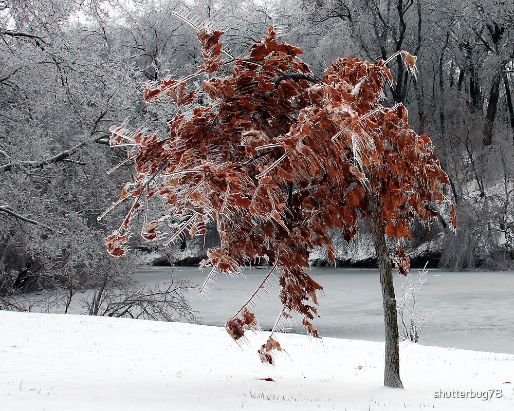 Beauty after a fall icestorm by shutterbug78
