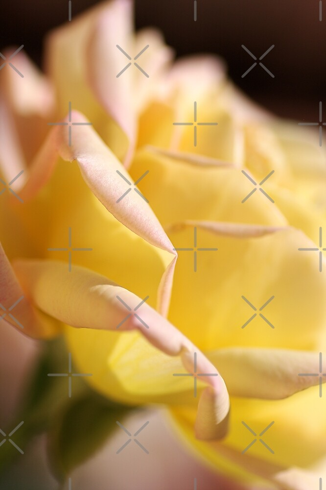 Lush Yellow Rose by Joy Watson