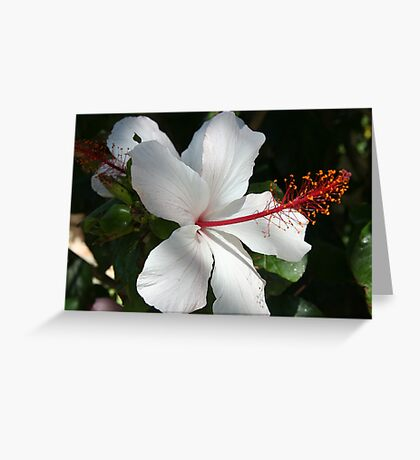 Hibiscus - apple blossom Greeting Card