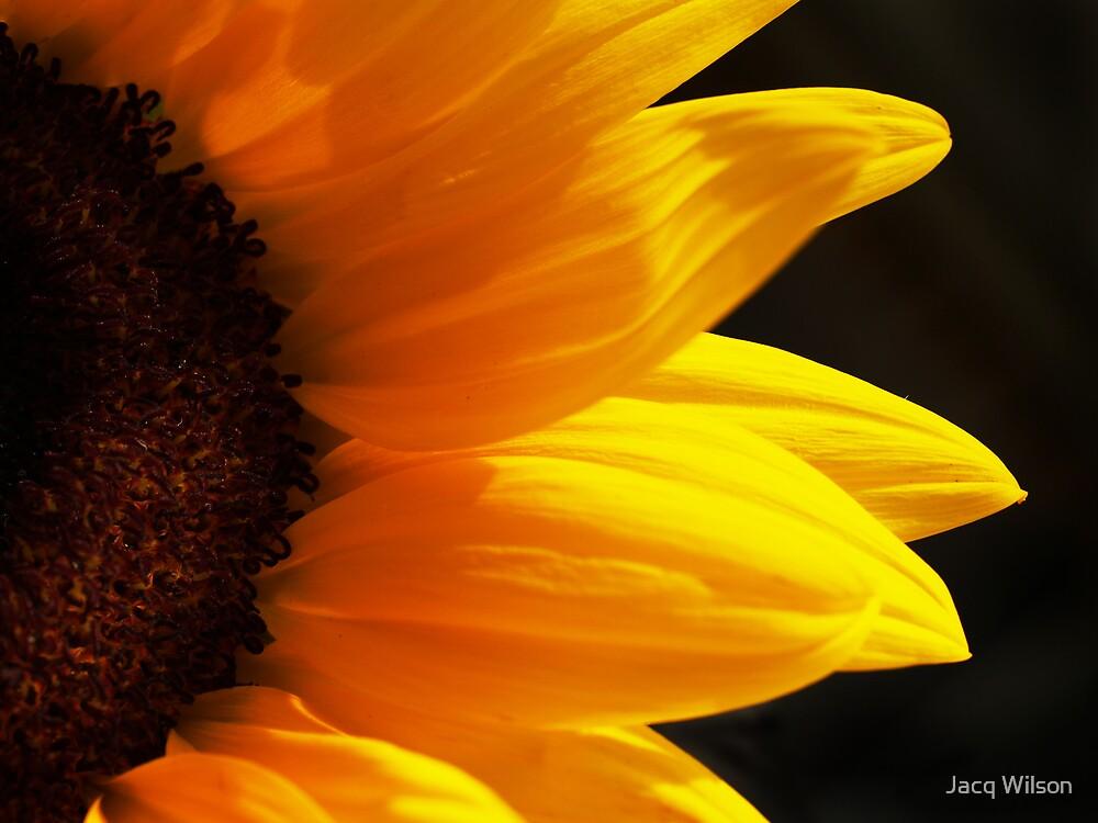 Sunflower by Jacq Wilson