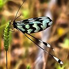 Lacewing by taiche