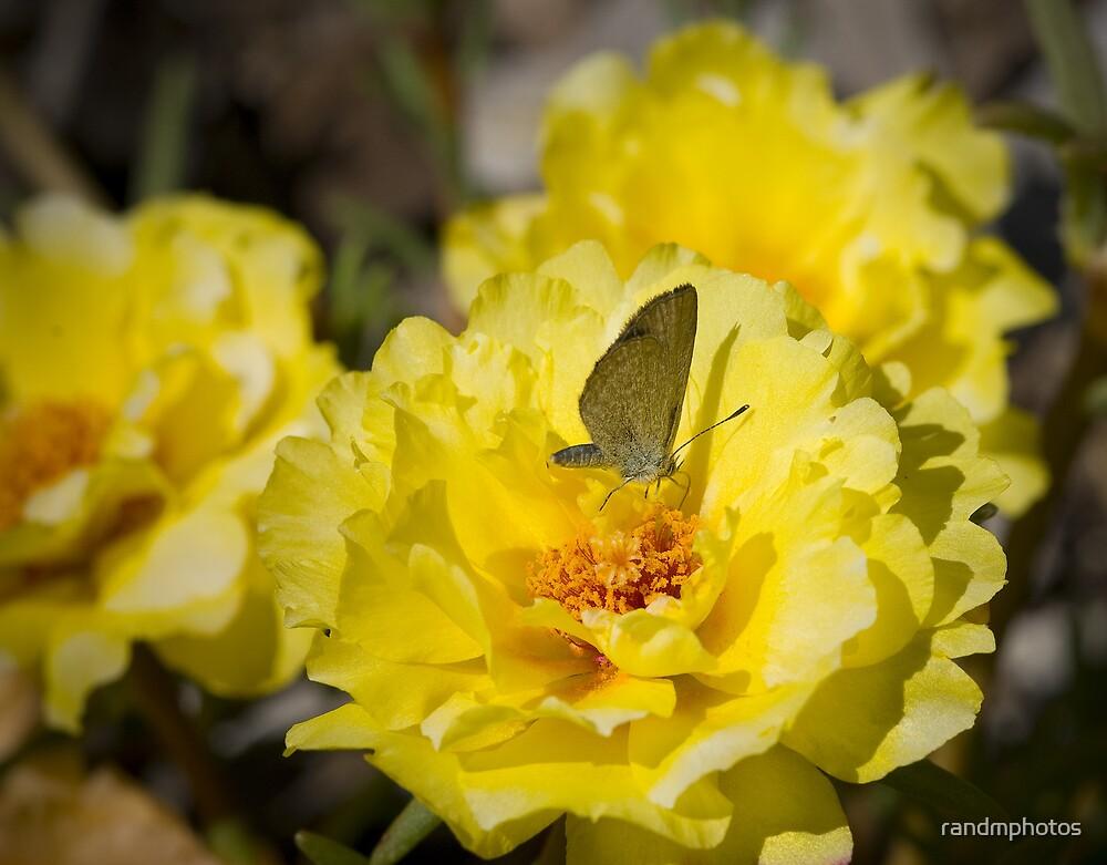 Nectar by randmphotos