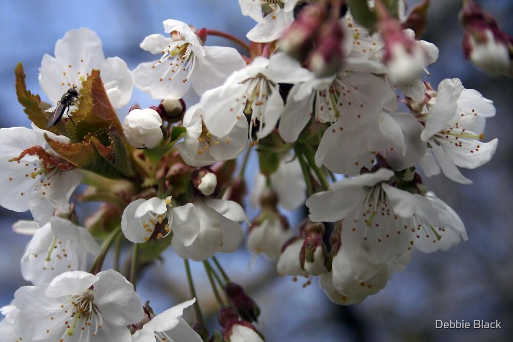 Blossom by Debbie Black