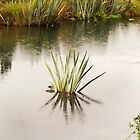 Pond Reflections by Elaine Teague