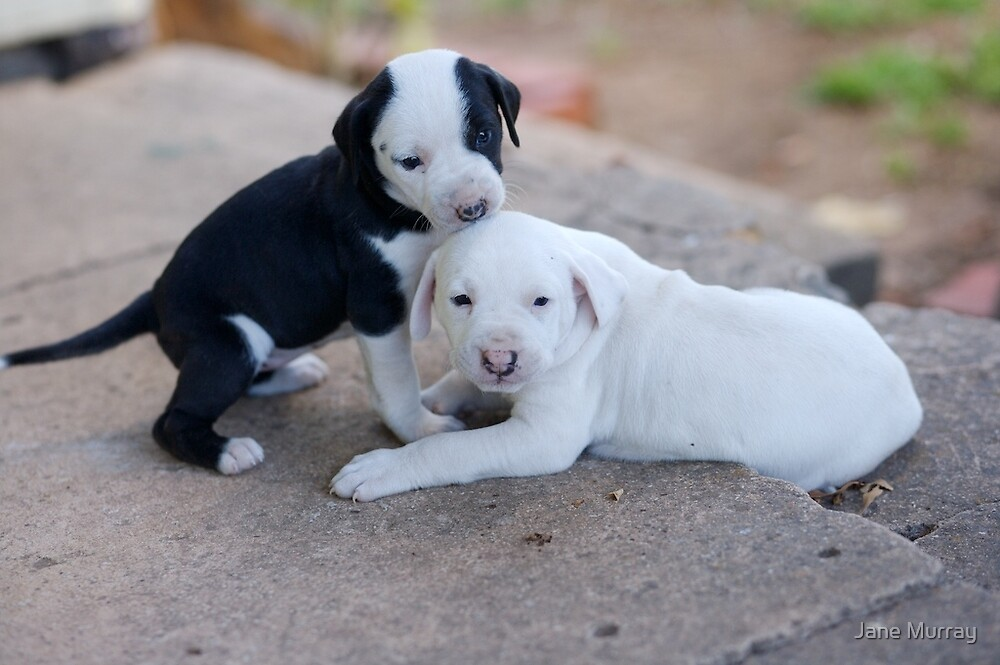 First playtime: puppies at 5 weeks by Jane Murray