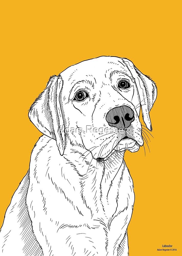 Labrador Dog Portrait by Adam Regester