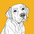 Labrador Dog Portrait by Adam Regester