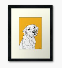 Labrador Dog Portrait Framed Print