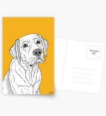 Labrador Dog Portrait Postcards