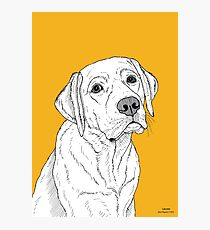 Labrador Dog Portrait Photographic Print