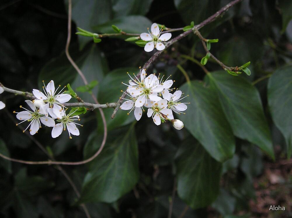 White Flowers by Aloha