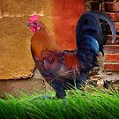 Lovely Rooster by Penny Odom
