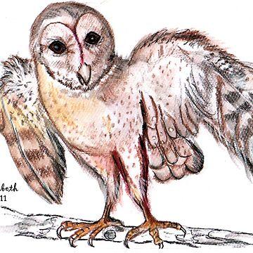 Tyto alba (Barn owl) / Nonnetjie-uil by Happyart