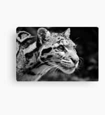 Clouded Leopard 1 - B&W Canvas Print
