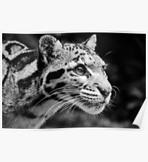 Clouded Leopard 1 - B&W Poster