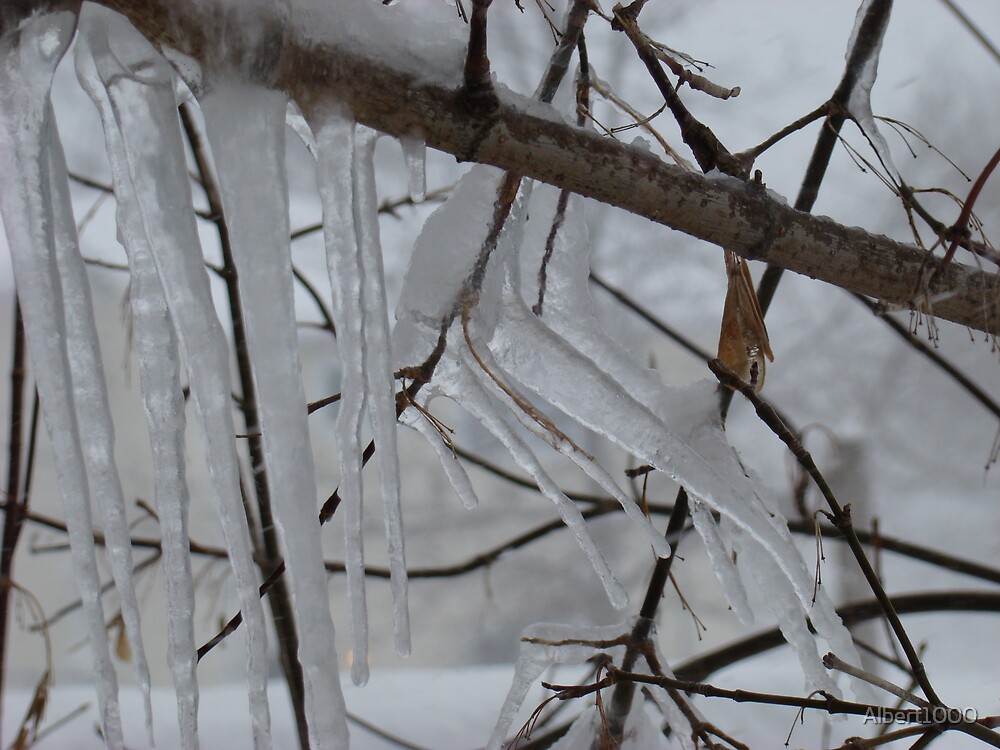 Icy tree by Albert1000