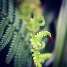 Lush green ferns by Jonesyinc