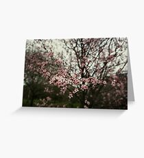 Faded pink blossom Greeting Card