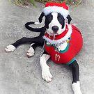 Happy Christmas Dog - Drouin Gippsland by Bev Pascoe