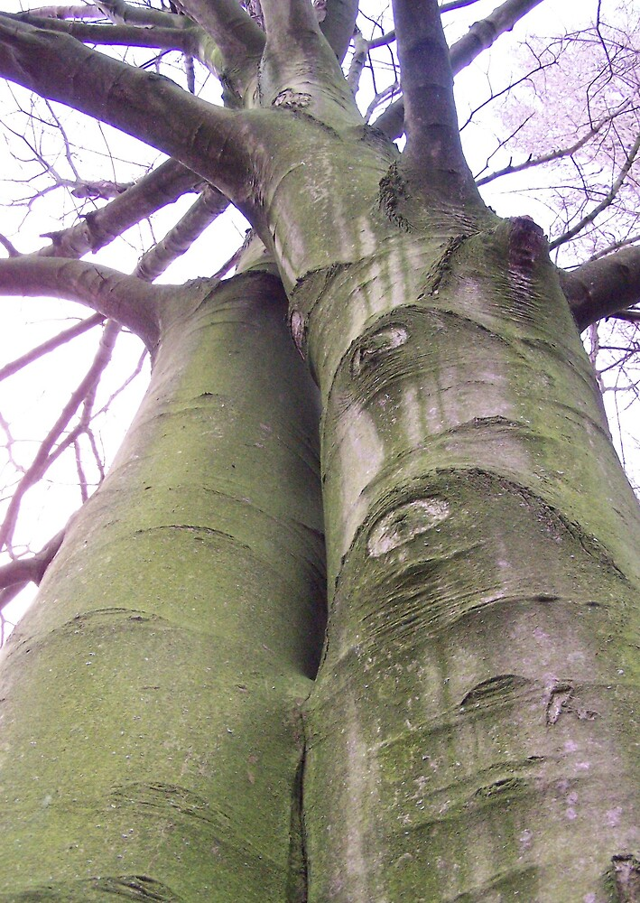 Tree Hugging by Emma and Dave Atkinson