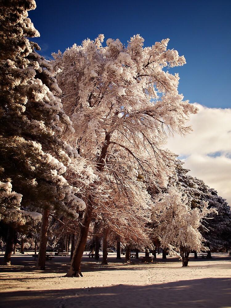 Tree in color by XiuyiFan