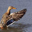Lady Duck by Jo Nijenhuis